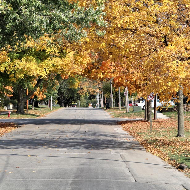 Street covered with canopy of fall leaves
