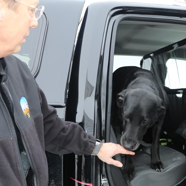 Dog in vehicle