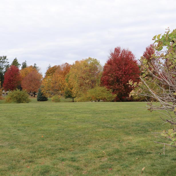 Fall Trees at the city cemetery